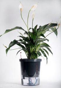 plantenpot uitvinding